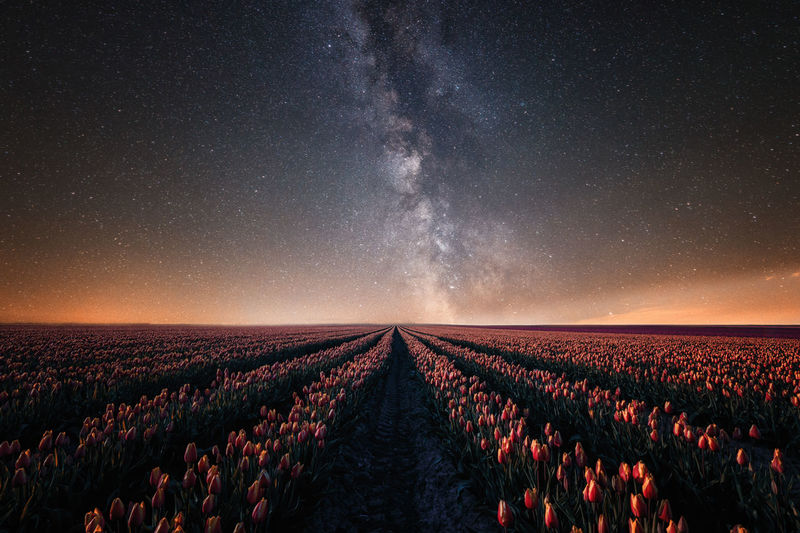 Milkyway and tulip field near Magdeburg Astronomy Beauty In Nature Constellation Field Galaxy Growth Infinity Landscape Magdeburg Milchstrasse Milky Way Milkyway Nature Night No People Outdoors Rural Scene Scenics Sky Space Star - Space Star Field Tulip Tulips EyeEmNewHere Live For The Story