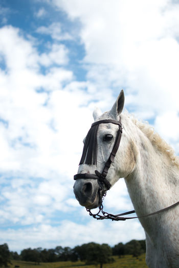 Close-up of horse against the sky