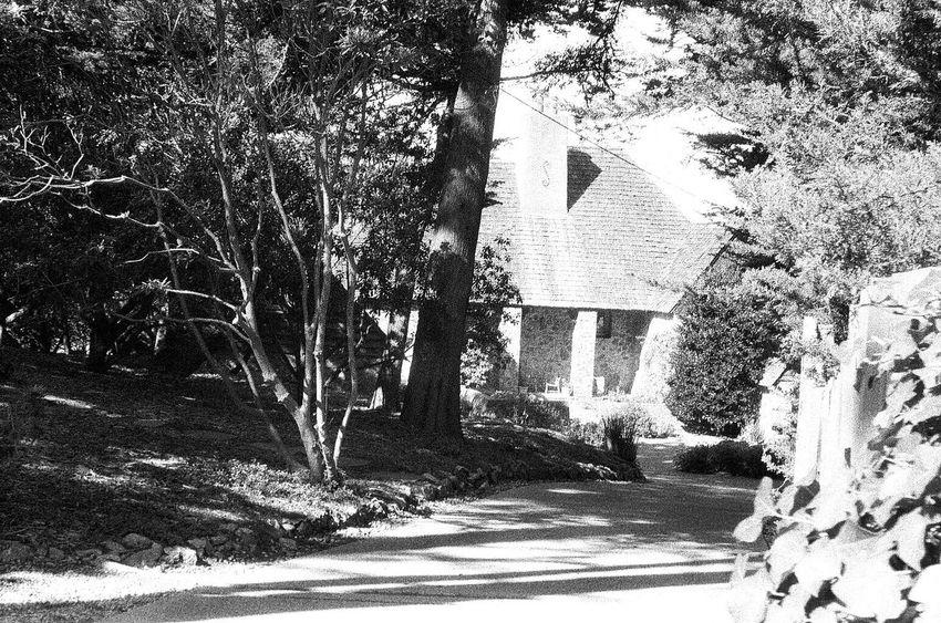 Tree NATURA Classica Ilford Delta 3200 Koduckgirl Blknwht Carmel California Grainy Photo Film