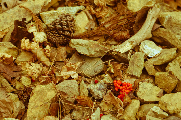 Abundance Backgrounds Brown Close-up Day Detail EyeEm Best Shots EyeEm Nature Lover Firewood Focus On Foreground Full Frame Heap Japan Photography Large Group Of Objects LastYear Log Lumber Industry Natural Pattern Nature No People Outdoors Pinecone Still Life Stone 哀愁