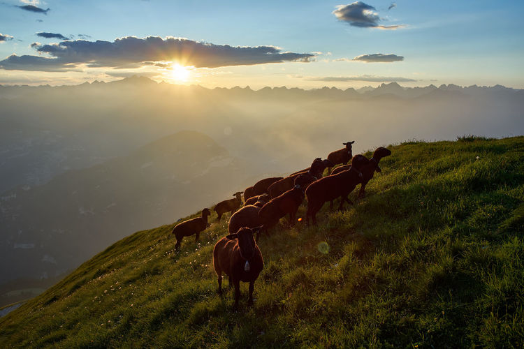Sheep grazing on mountain