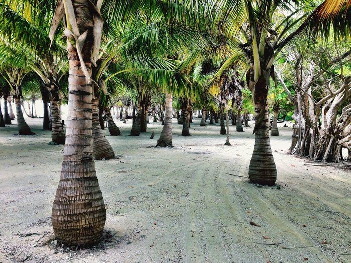 Island Belize  Central America Carribean