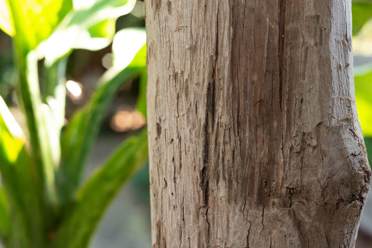 Close-up of lizard on tree trunk