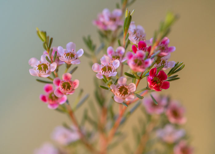 growing flower Nature Beauty In Nature Blooming Blooms Blossoms  Botanical Close-up Day Flora Flower Flower Head Flowers Fragility Freshness Garden Growing Flower Growth Nature No People Outdoors Petal Plant
