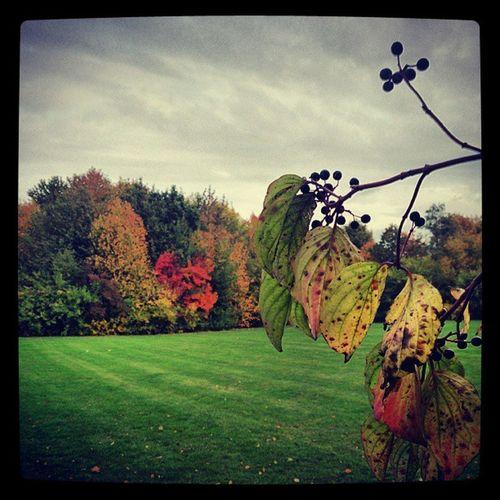 Hösten är vacker Autumn H öst Ig_sweden_autumn2013 Ig_sweden instalike tagstagram world_shotz gloryofsweden sweden instamood instalike