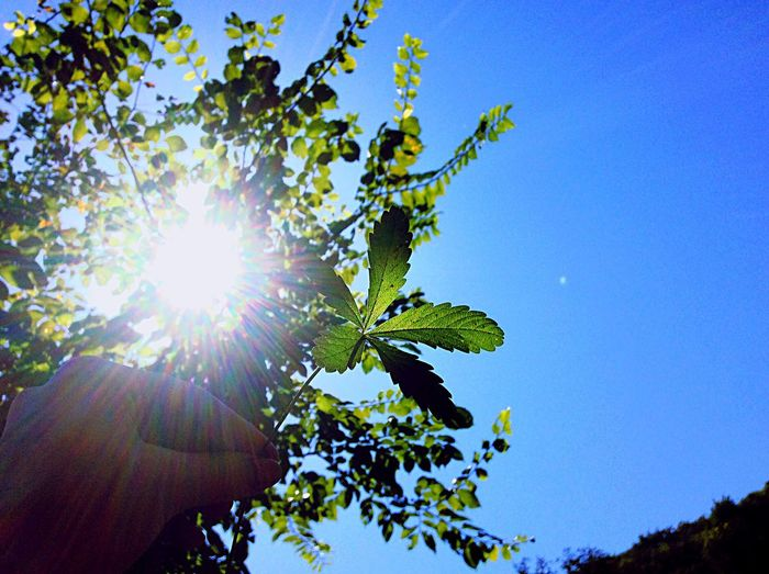 Low angle view of tree against blue sky on sunny day