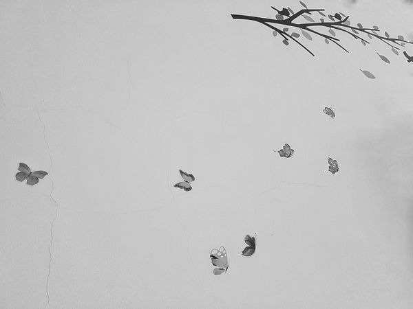 Cold Temperature Bird No People Nature Snow Winter Outdoors Animal Themes Insect Day Beauty In Nature Sky Drone  2017 Amazing_captures Black & White Monocrhome Photographer View Bnw Taking Photos Popular Photos Bnwphotography Amazing_bw Blackandwhite Photography