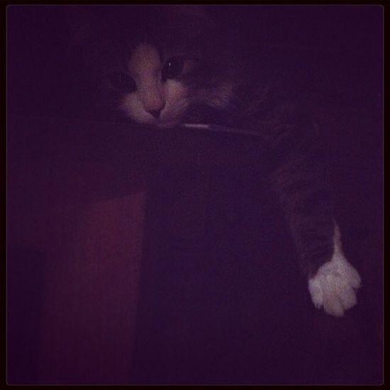 Cat Love Pets ❤