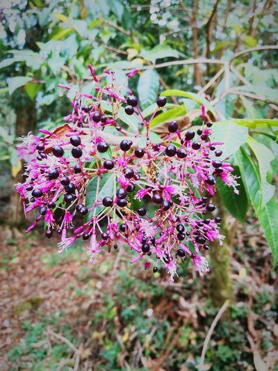 Nature Purple