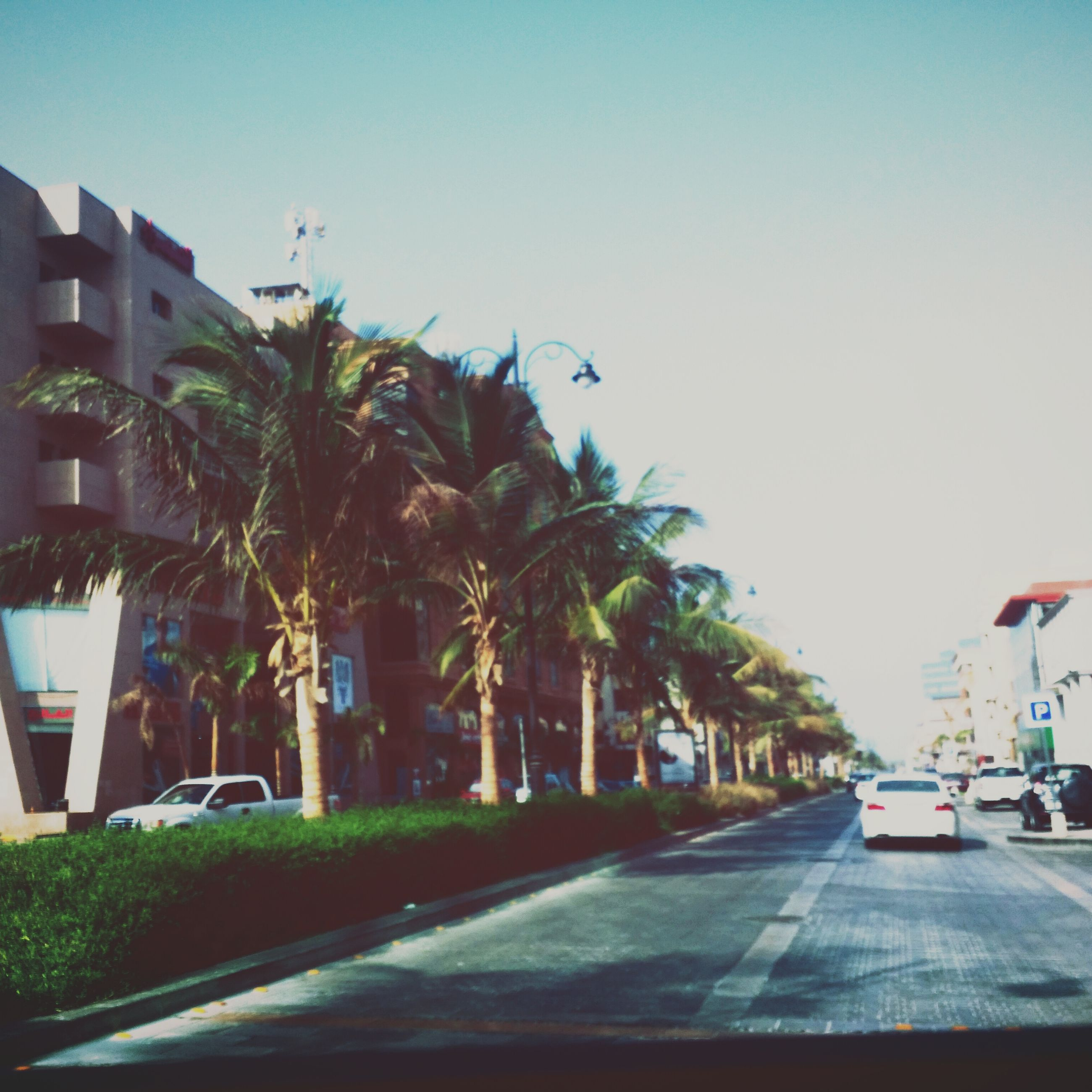 transportation, road, clear sky, car, tree, road marking, street, the way forward, building exterior, palm tree, built structure, architecture, land vehicle, mode of transport, street light, copy space, blue, city, sky, diminishing perspective