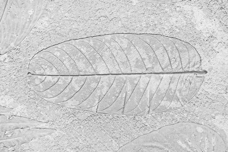 High angle view of feather on sand