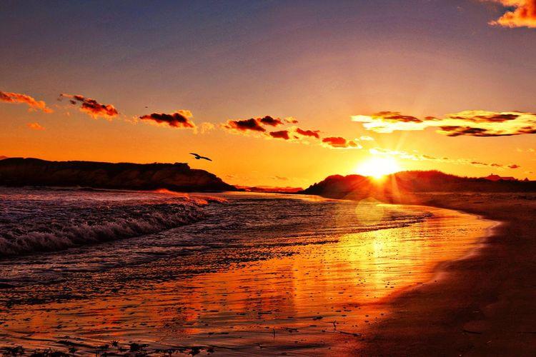 Sunset Sky Beauty In Nature Scenics - Nature Orange Color Tranquil Scene Water Vertebrate Animal Bird Land No People Animals In The Wild Animal Themes Idyllic Sunlight Outdoors Nature Sun Tranquility