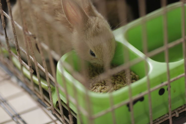 Close-up of a rabbit in cage