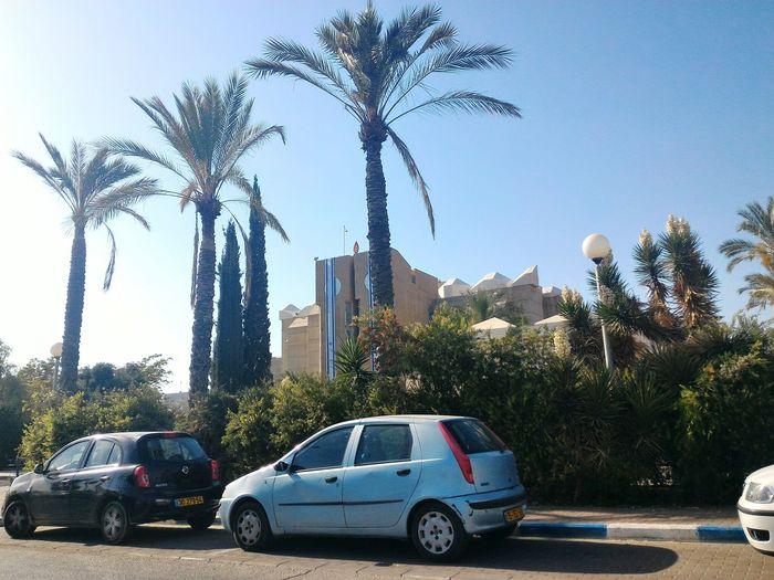 Be'er Sheva Israel Desert Palm Trees Flag Building