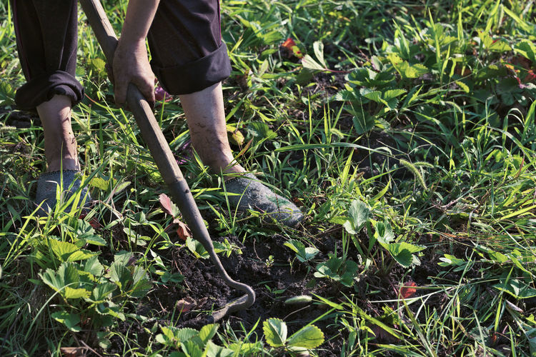 Farmer using a hoe, with his hands removes weeds from the soil on the field Body Part Day Farmer Field Gardening Grass Green Color Growth Human Body Part Human Leg Land Low Section Men Nature Occupation Outdoors People Plant Real People Two People Working