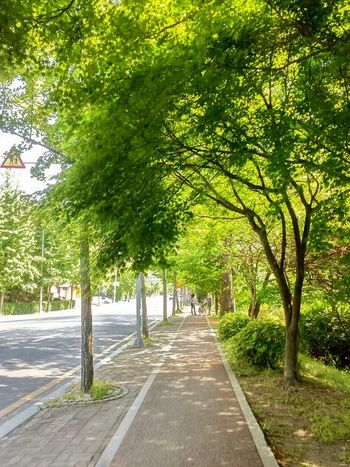 Street Photography Green Tree Porn Take A Walk