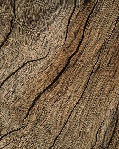 Wood tree Tree
