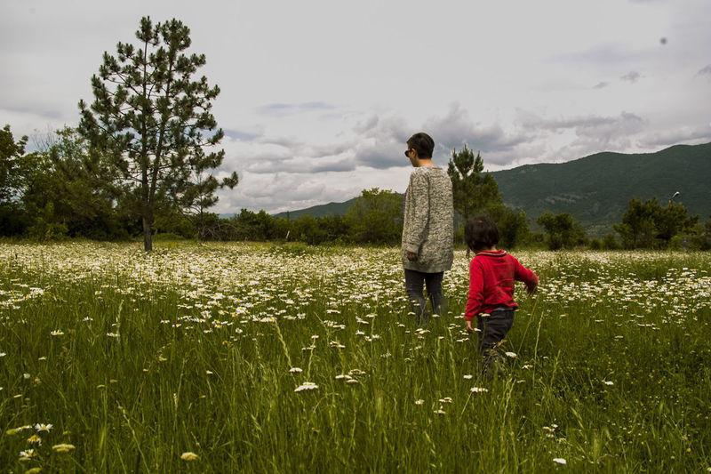 Chamomile Field Georgia Bazaleti