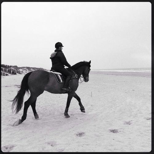 Bredene Horse In The Beach Horseriding Cloudy Beach