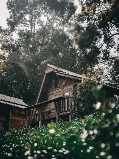 Low angle view of trees and house in forest