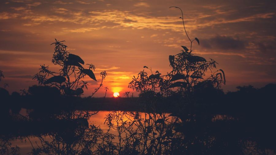 Sunset at Martapura City of Indonesia Martapura Kalsel INDONESIA Orange Sky Nature Landscapes Landscape EyeEm Selects EyeEmNewHere Tree Water Sunset Rice Paddy Agriculture Silhouette Reflection Lake Multi Colored Sky Reflecting Pool Reflection Lake Rainforest Tropical Rainforest Romantic Sky Tree Area