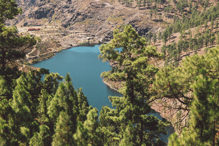 High angle view of lake amidst trees in forest