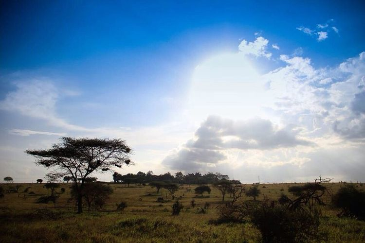 The beautiful Kenyan savanna...too much love in this country. Kenya Landscape Sunshine Canon