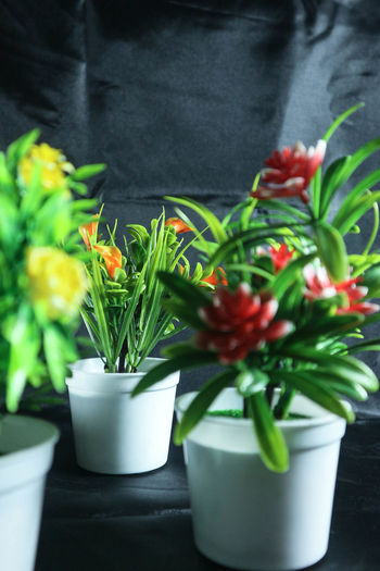Beauty Colors Close-up Decorationtime Flower Flower Head Flowering Plant Green Color Plant Potted Plant EyeEmNewHere