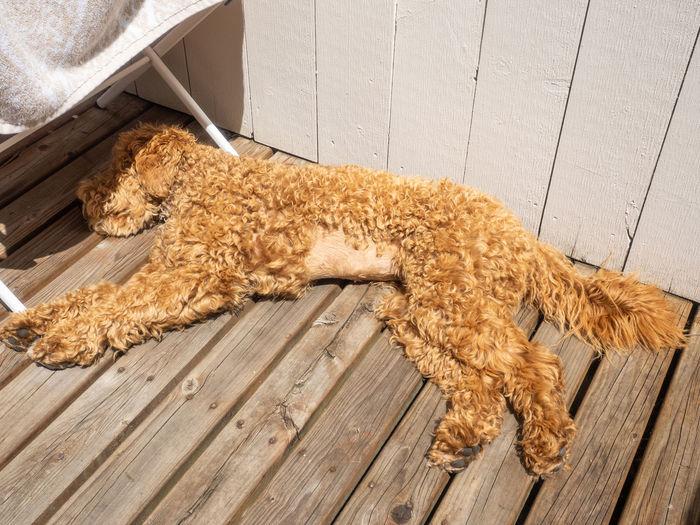 High angle view of an animal on hardwood floor