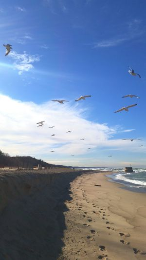 Low Angle View Of Seagulls Flying Over Beach