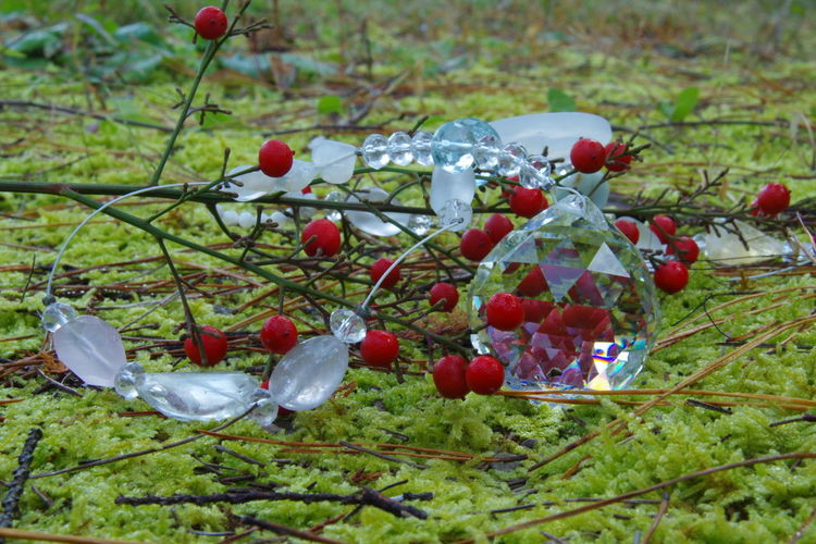No People Outdoors Beauty In Nature Close-up Autumn Colours EyeEm Nature Lover Beauty In Nature Japan Photography Moss-covered Pentax K-3 Nature Crystal Clear Quartz Stone Sun Catcher Quartz Pentax Quartz Crystal Forest Autumn Freshness Rose Hip Red Fruit Christmas Craft Christmas Tree