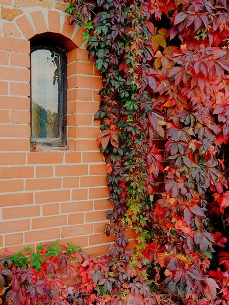 Autumn Collection Leafs Red Wall Art Beautiful Brick Wall Window