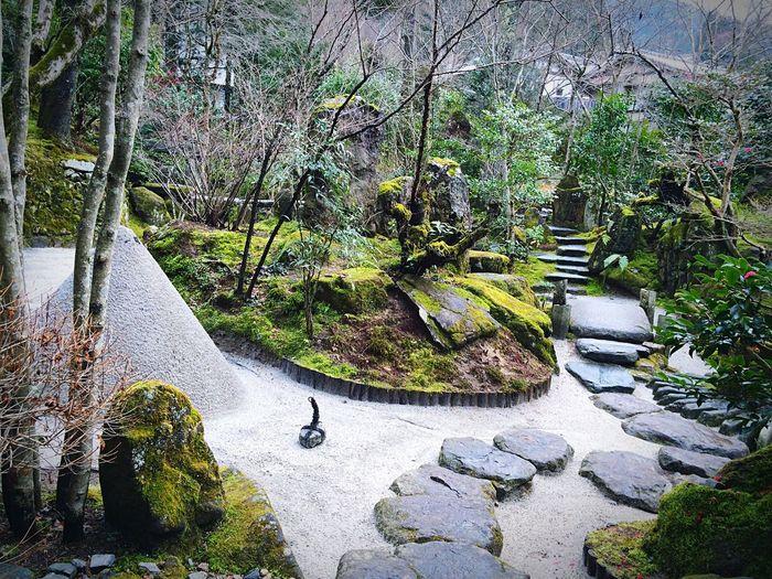 宝泉院 大原 庭園 京都 Kyoto 寺社仏閣 Relaxing 宝楽園