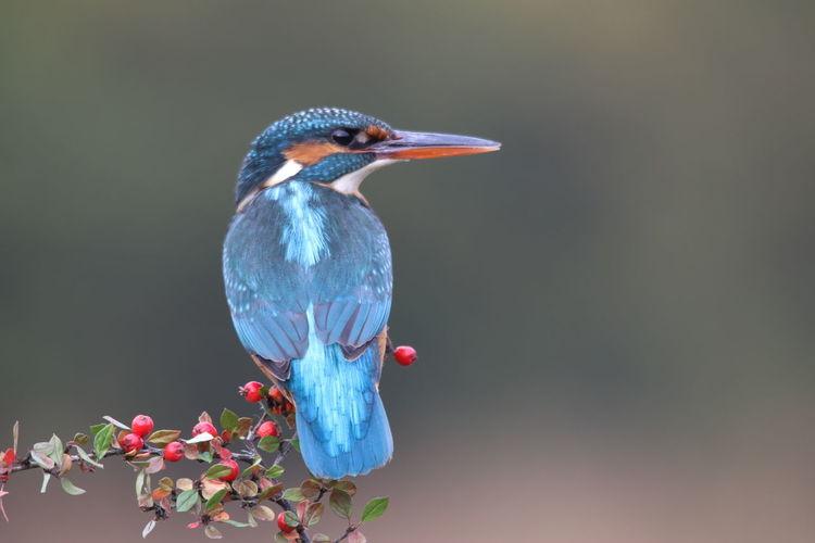 Bird Water Red