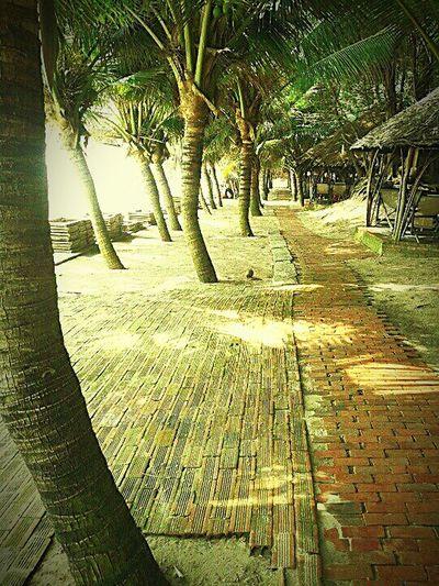 Tropical Paradise Beach Resort View Vungtau Vietnam Asian  Summer Travel Coconut Trees Lovelife Life Is A Beach