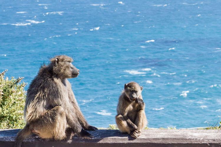 Monkeys on shore