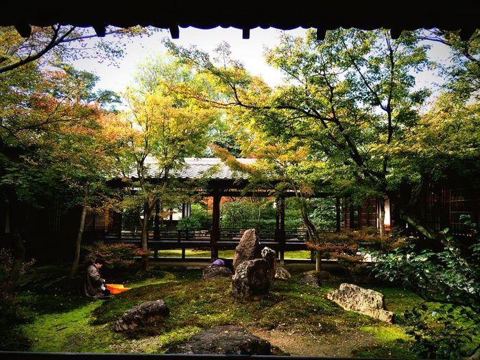 京都Japan Relaxing 建仁寺 紅葉