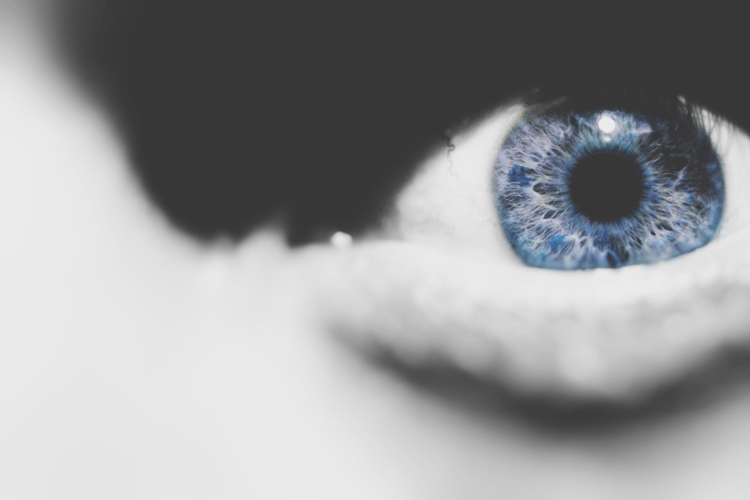 close-up, indoors, part of, selective focus, human eye, one animal, studio shot, pets, extreme close-up, eyesight, detail, extreme close up, sensory perception, looking at camera, eyelash, cropped, unrecognizable person