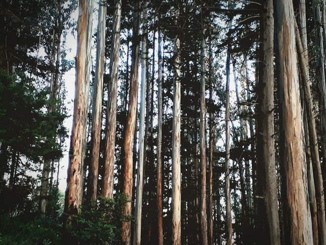Tree Nature Forest Beauty In Nature No People Full Frame Tree Trunk Tranquility Sky Outdoors Backgrounds Cloud - Sky