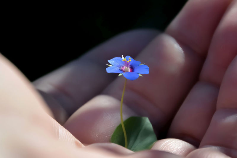 Beauty In Nature Body Part Close-up Finger Flower Flower Head Fragility Freshness Hand Holding Human Body Part Human Hand Nature Petal Purple Real People A New Perspective On Life