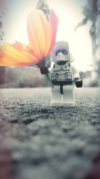 Taking Photos Peace Make Peace Not War ✌ Starwars Toy Photography Mobile Photography Flower Monochromatic Check This Out My Passion Free Time LEGO