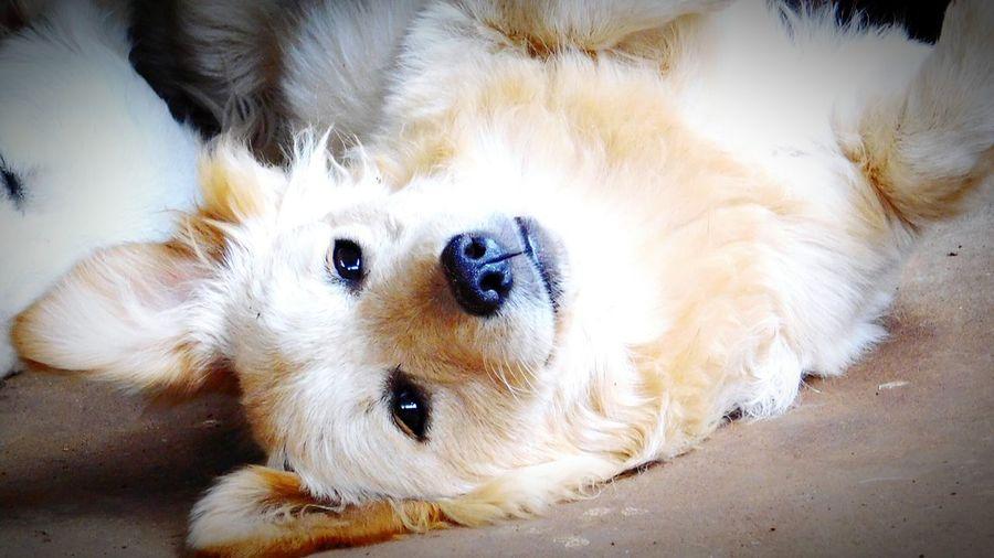 Animals Animal Photography Dogs Dogstagram Puppy Photooftheday Travel Photography Whitedog Pet Photography  Pet