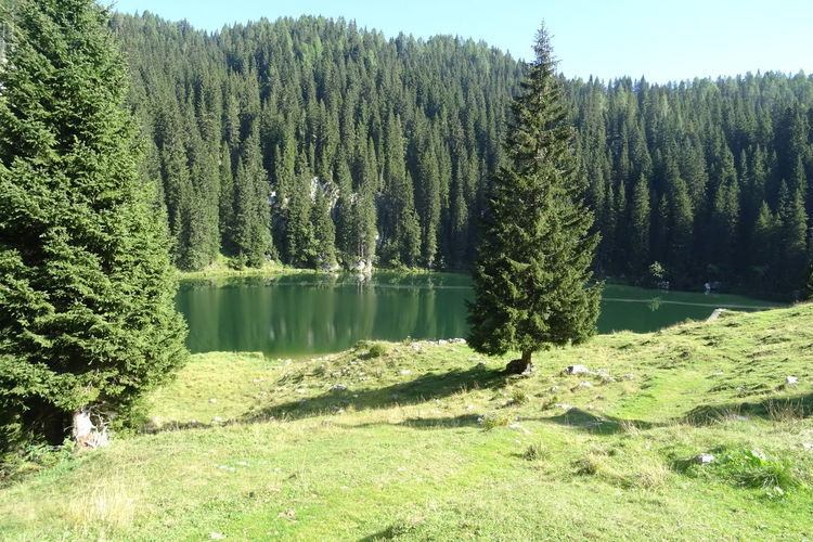 Seven Lakes Slovenia Triglav National Park Beauty In Nature Forest Green Color Lake Nature Water