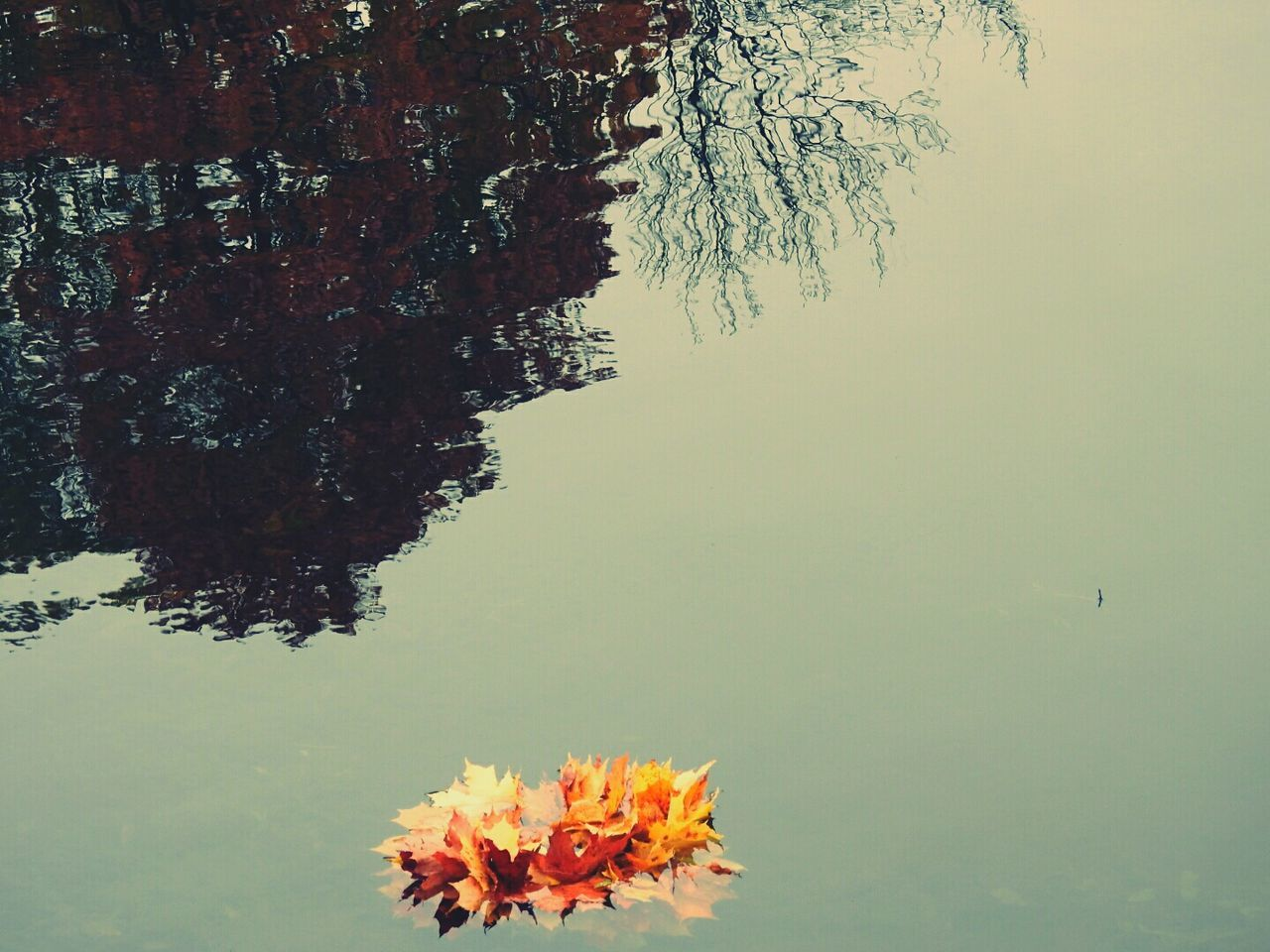 water, nature, tree, beauty in nature, flower, lake, tranquility, leaf, growth, waterfront, floating on water, no people, tranquil scene, outdoors, day, scenics, plant, foreground, lily pad, sky, freshness, scenery, flower head, close-up