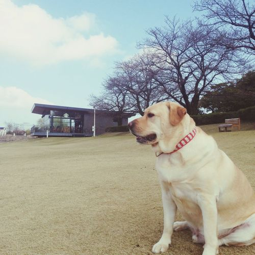 I Love My Dog Sunset #sun #clouds #skylovers #sky #nature #beautifulinnature #naturalbeauty #photography #landscape Cherry Blossoms EyeEm Nature Lover