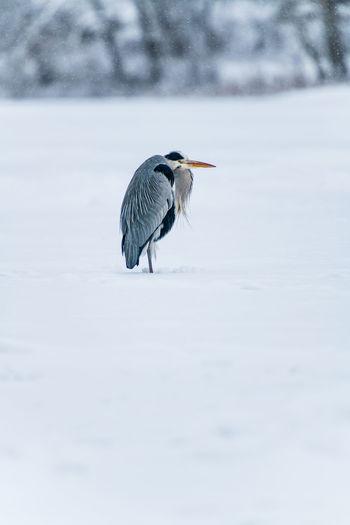 Bird perching on a snow