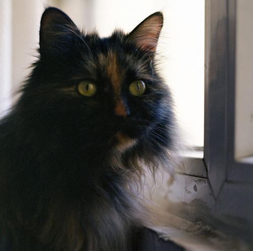 Mamiya C330 Kodakportra400 120 Film Cat