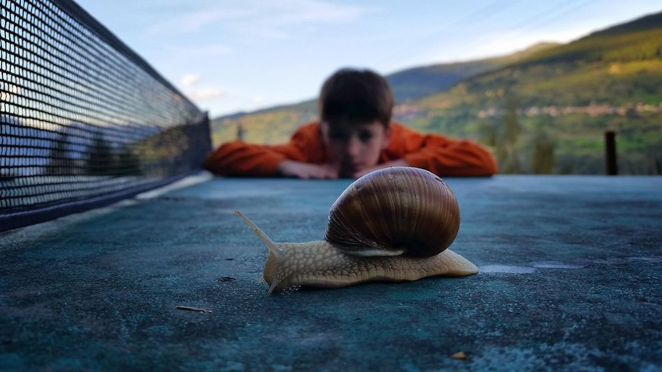 Animal Escargot Switzerland First Eyeem Photo