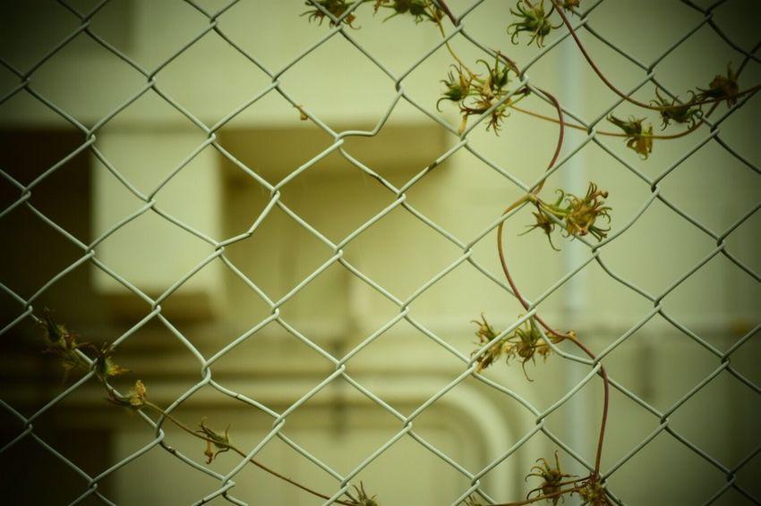 生きる Life Force Wire 日常 Nature Day Beauty In Nature Streetphotography Nature Chainlink Fence Fence