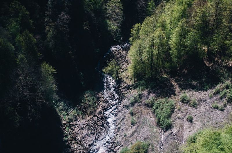 High Angle View Of Stream Amidst Trees